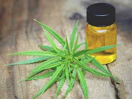 About CBD Oil and Cannabinol Oil